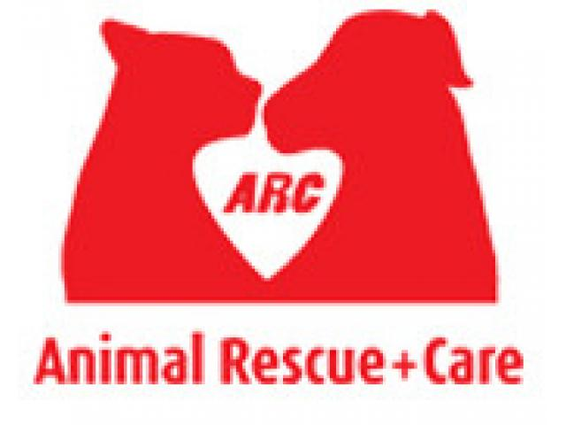 ARC Rescues Saigon's Abandoned Cats and Dogs