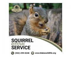 Squirrel Removal Service