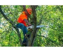 Affordable Tree Removal Service in Bronx