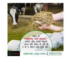 Silage for Animals